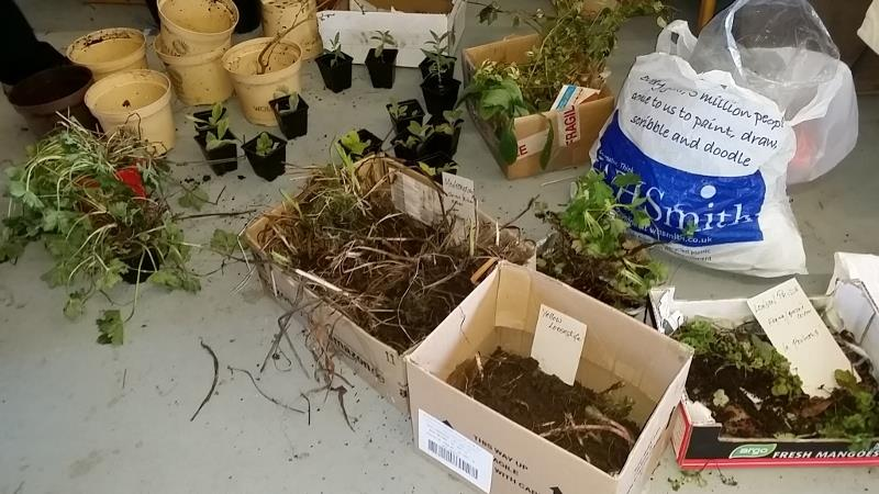 Free plants at PACT Seedy Saturday