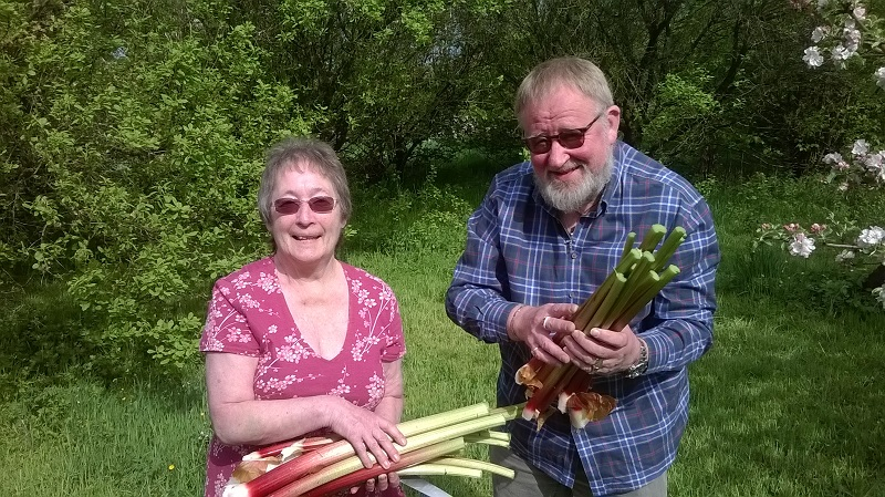 Heather and Graham get Freegle rhubarb