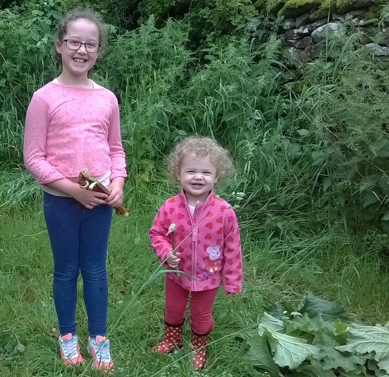 Casie Reynolds and Lilly Graham picking free Freegle rhubarb